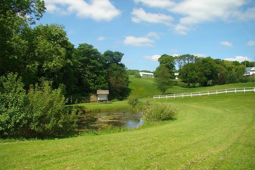 Outdoor Wildlife Pond