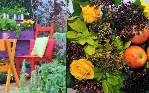 Harrogate Autumn Flower Show
