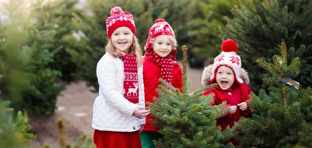 Christmas tree sales Harrogate