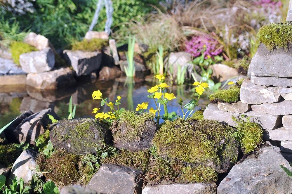 Show display garden